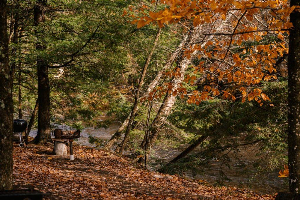 Madlavning i skov